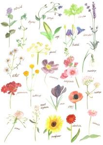 flowers - 9